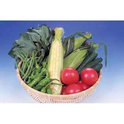 【1-7】旬の野菜詰合せ おまかせセット【限定20/月】