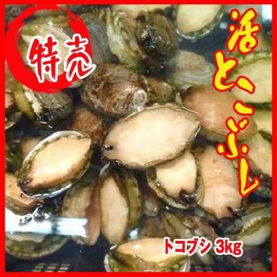 【業務用】活とこぶし 3kg 1個18-35g トコブシ