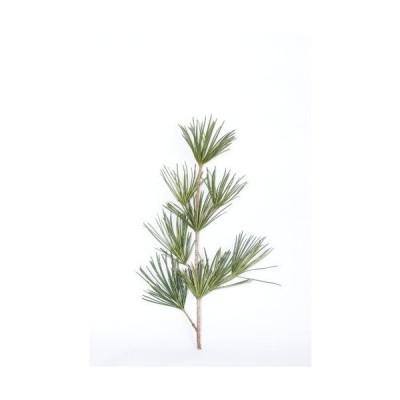 花木屋 高野槇(こうやまき・コウヤマキ)の切り枝 60cm 仏花 供花 墓花 盆 正月 彼岸 花材 緑