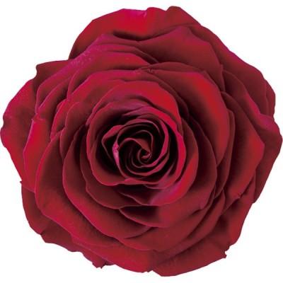 特価 プリザーブド アモローサ リンダ LINDA  1輪入 アンティークレッド RED-01 は行 バラ ローズ