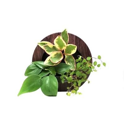 トヨタサントリーミドリエトヨタサントリーミドリエ MIDORIE DESIGN(ミドリエデザイン) 観葉植物 グリーンフレーム 木目調ダーク17B4 1個(直送品)