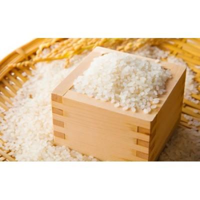 小諸産 こしひかり 2.5kg 長野 信州 コシヒカリ 精米 美味しいお米 お取り寄せ