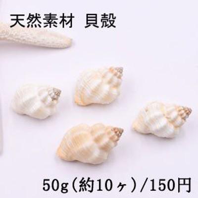 天然素材 巻貝の貝殻 ハンドメイド用【50g(約10ヶ)】