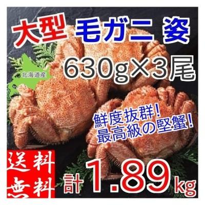 毛ガニ 1.89kg (630g×3尾) 北海道産 ギフト 浜茹で ボイル 冷凍 カニ味噌 3特 4特 良品 選別 厳選 毛蟹 お取り寄せ