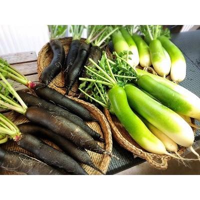 西洋野菜と季節の鹿児島野菜セット