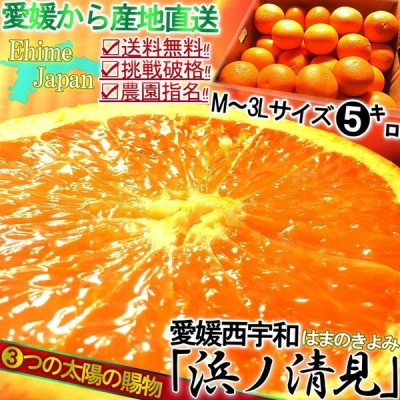 産地直送 清見オレンジ 約5kg M〜3Lサイズ 愛媛県・西宇和産 訳あり品 八幡浜の農家が育てた抜群の味!ジューシーな果肉に濃厚な味