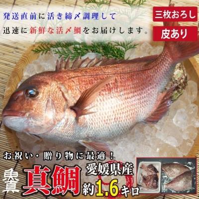 真鯛 三枚おろし (皮つき) 1尾分 (1尾あたり約1.6kg) 養殖真鯛 お作り お祝い ギフト お食い初め たい 3枚おろし 業務用 魚真