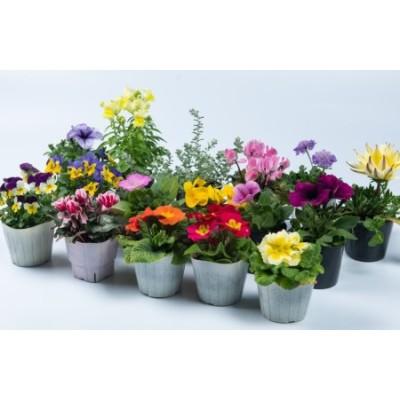 MS-140 季節の花の詰め合わせ