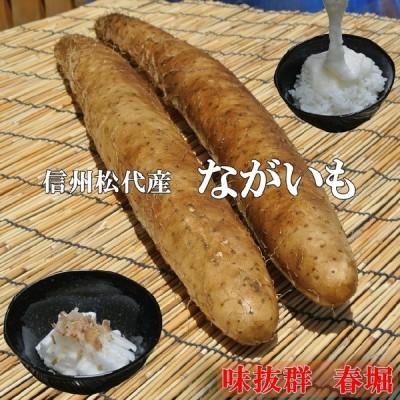 信州松代産長芋山芋食欲増進健康長いも【10kg優品6〜8本】長いも