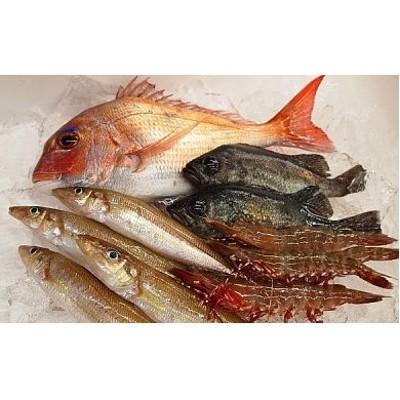 B001◇由良漁港の鮮魚セット