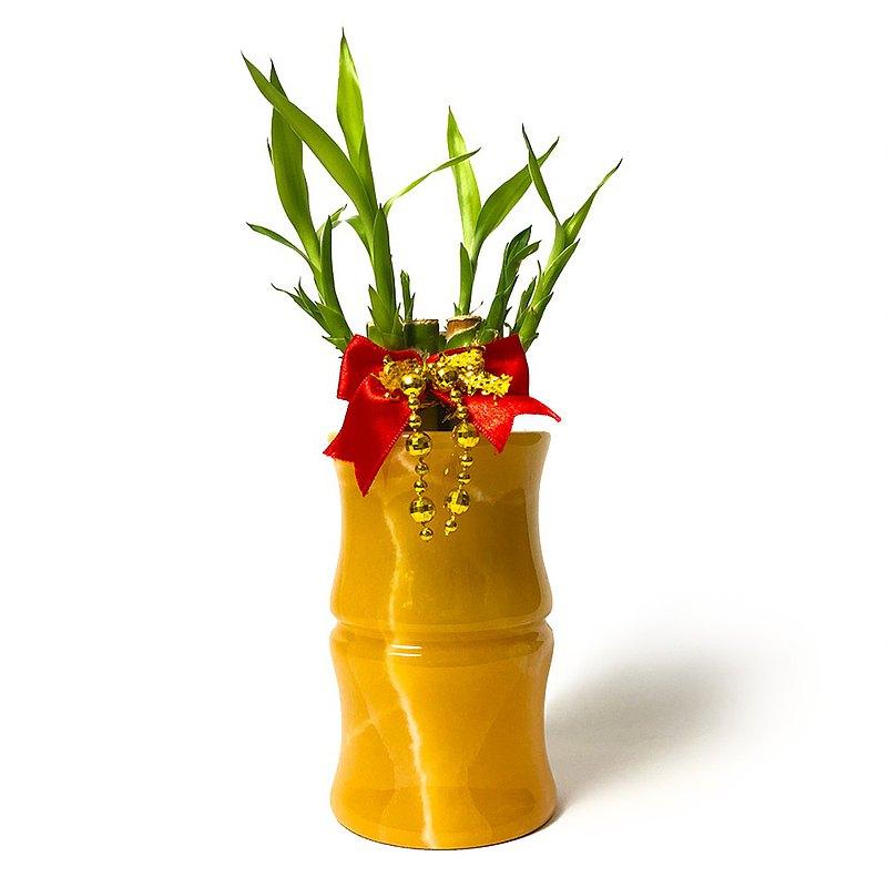 黃玉 富貴竹盆栽