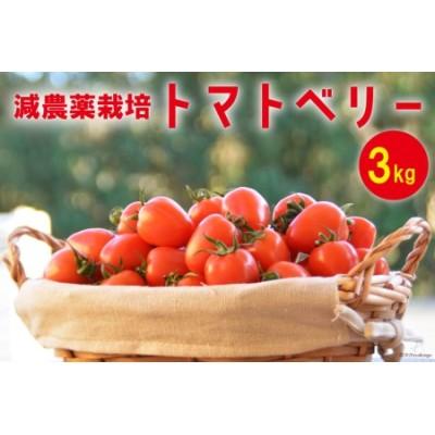 【減農薬栽培】トマトベリー 3kg