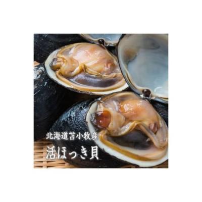 ほっき貝 活北寄貝 送料無料 2kg 6〜8玉 北海道苫小牧産