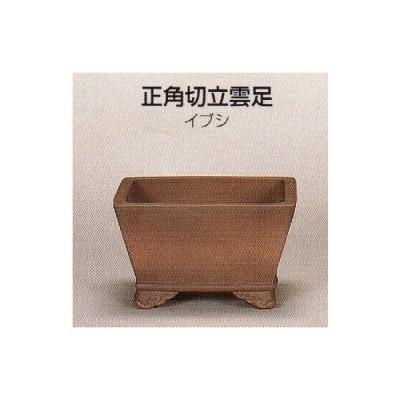 植木鉢 陶器 常滑焼  26T22【和泉屋】正角切立雲足盆栽鉢(6.5号_イブシ)