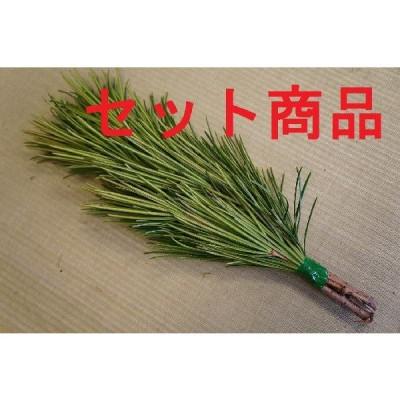 高野槇(コウヤマキ)No.03 10束セット/2本〜6本組み(本数指定不可) 30cm-35cmこうやまき