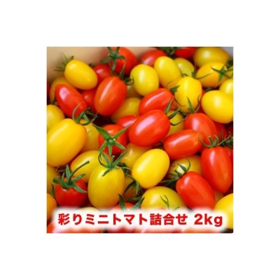 ふるさと納税 大崎市 彩りミニトマト詰め合わせ