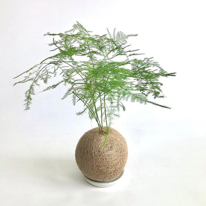 文竹 手作植栽苔球