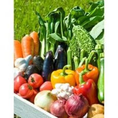 【高知県産】農薬不使用 季節の野菜セット  (4~5名様用)