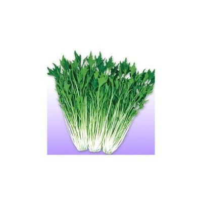 京白泉水菜 (水菜、京菜の種) 2dl缶 ( 野菜の種 )