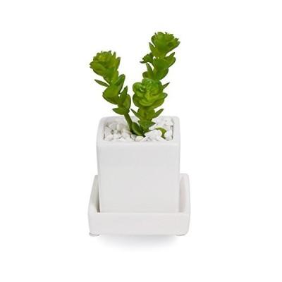 GREENPARK アエオニウム 白玉石 皿付ミニベース 造花 フェイクグリーン