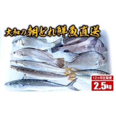 G025 【12ヶ月定期便】大和海商の朝どれ鮮魚直送定期便 2.5kg