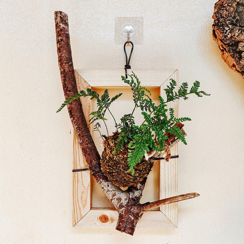 【自然風畫框】 兔腳蕨苔球/ 小琉球芒果木
