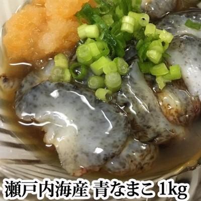 【#元気いただきますプロジェクト】青なまこ 活き 瀬戸内海産 1kg ナマコ 海鼠 なまこ 青