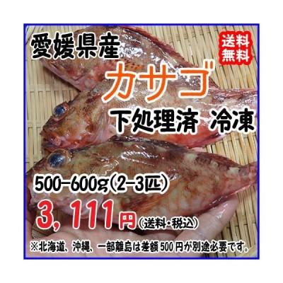 愛媛 ( カサゴ ) 120-200gサイズ 500-600g原体分 煮魚 焼魚 下処理済み 送料無料 宇和海の幸問屋