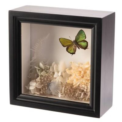 プリザーブドボックス プリザーブドフラワー ミドリシジミ蝶1頭 インテリア 蝶の標本 ドイツ箱 チョウ 岡山県 ティーウッド