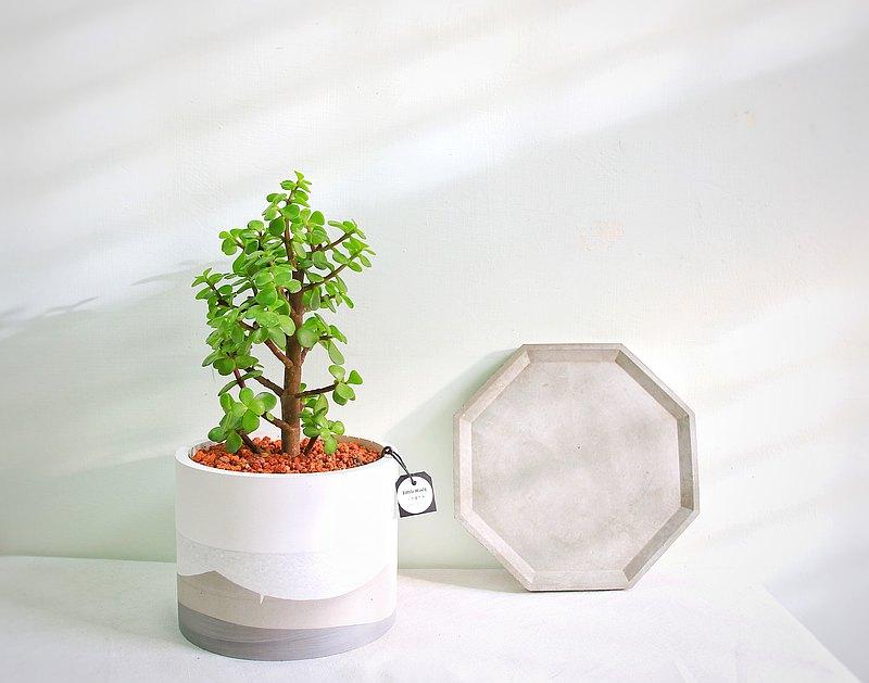 銀杏木 • L-圓形水泥盆栽 可客製英文名數字 開幕盆栽