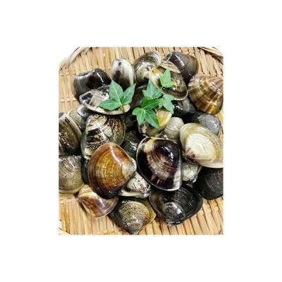 ふるさと納税 桑名市 マルヨシ水産 桑名産中粒天然蛤0.9kg(約27個)a*23