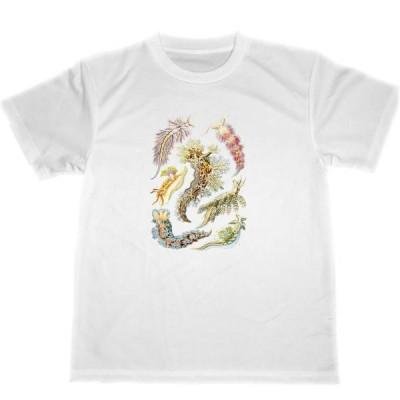 エルンスト ヘッケル ドライ Tシャツ 生物の驚異的な形 ウミウシ ダイビング グッズ