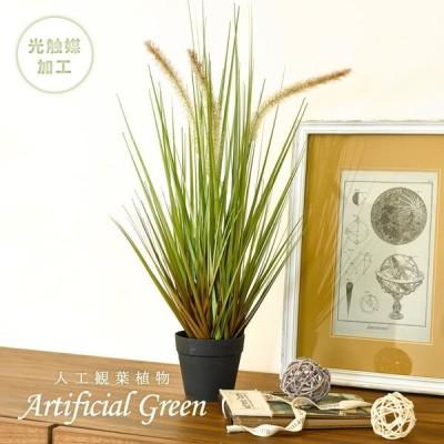 人工観葉植物 フェイクグリーン キャッツテールグラス SSサイズ 光触媒 おしゃれ インテリア 造花