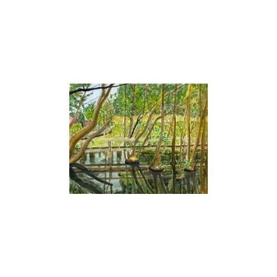 風景画 水彩 伊奈町運動公園の沼地2