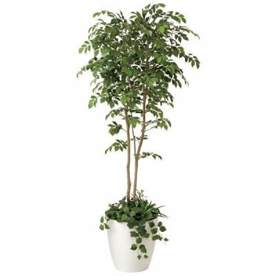 光触媒人工観葉植物 マウンテンアッシュ 1.8m 植栽付