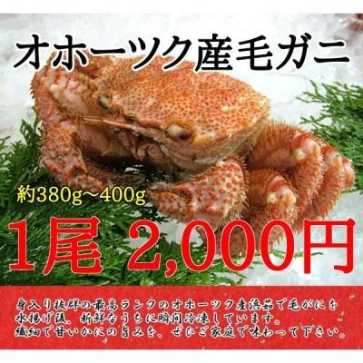 北海道産毛ガニ(1尾約350g〜370g)※現在価格は2680円※ペイペイ払いは送料無料対象外