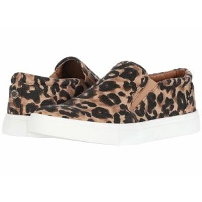 スティーブ マデン レディース スニーカー シューズ Amplify Sneaker Leopard