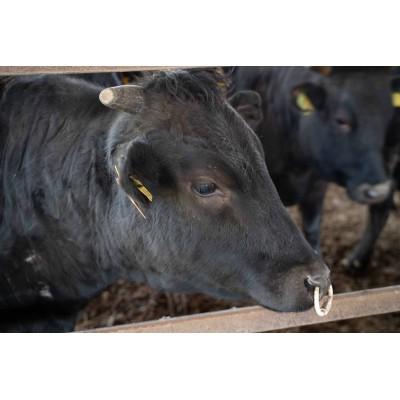 DY054_【数量限定】佐賀牛ひとくちステーキ 合計500g(500g×1P)黒毛和牛 和牛 牛肉 肉