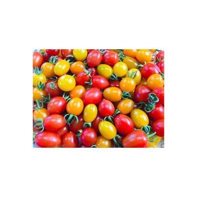 玉名市 ふるさと納税 農家直送プラム型ミニトマト彩りバラエティーセット3kg
