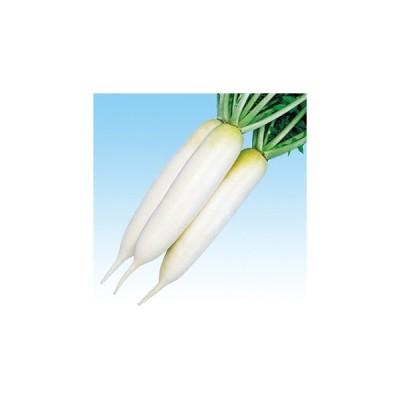 ダイコンの種 ひのくに 20ml ( 野菜の種 )