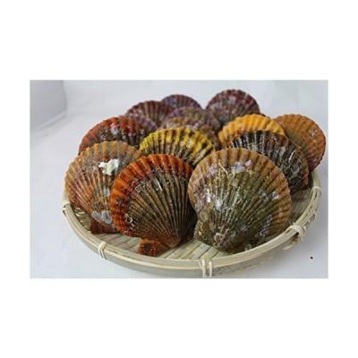 アッパッパ 活〆 三重県産 10個 ひおうぎ貝 桧扇貝
