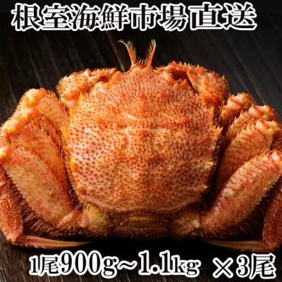 根室海鮮市場ボイル毛がに900g~1.1kg×3尾 D-28015