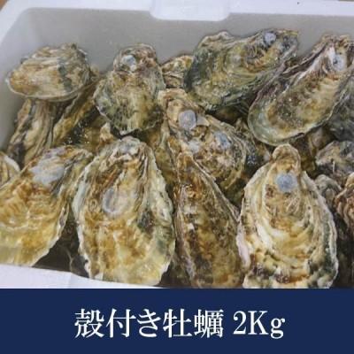 牡蠣 カキ 殻付き 2kg 大粒 兵庫県 相生産 ギフト 海鮮グルメ 産地直送 お取り寄せ 贈答 蒸し牡蠣 焼牡蠣 カンカン焼き 牡蠣フライ 国産 かき 生食用 送料無料