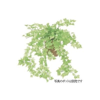 観葉植物 造花 ミニアイビーブッシュ M フレッシュグリーン 49cm 人工観葉植物 フェイクグリーン 光触媒 CT触媒 インテリア LEB-0115-M-FRGR (G-L)
