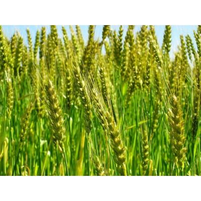 フランスパン用小麦粉 準強力粉 2.5kg×4袋(計10kg) バゲットやハードパンに H008-049