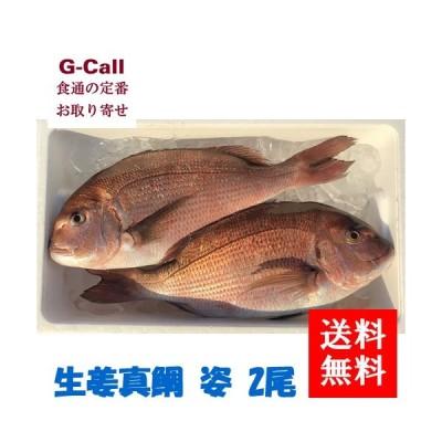送料無料 マリンジャパン 生姜真鯛 姿 2尾 魚介 お手軽 簡単調理 魚 ギフト 贈答 お取り寄せ 惣菜