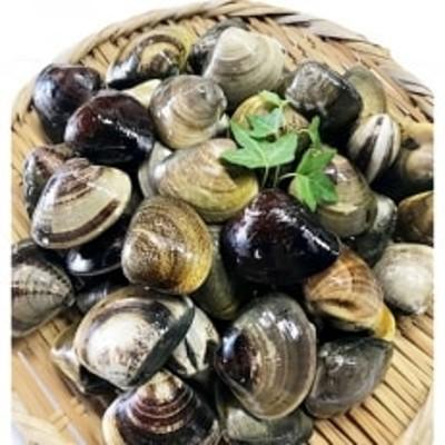 マルヨシ水産 桑名産中粒天然蛤1.3kg(約39個)m_53