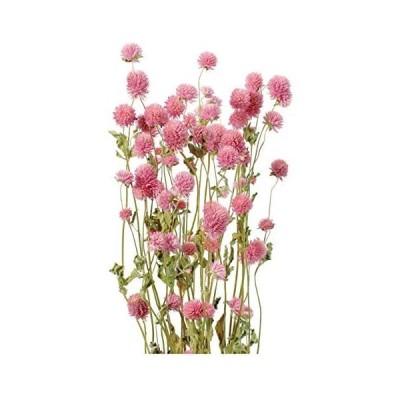 大地農園 ドライフラワー 千日紅(35g入り) ピンク DO10120-100