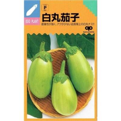 中原採種場 白丸茄子 約80粒