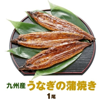九州産うなぎの蒲焼き1尾 140g〜150g 特製たれ、山椒付き 国産 鰻 ウナギ 土用の丑の日 お中元 ギフト
